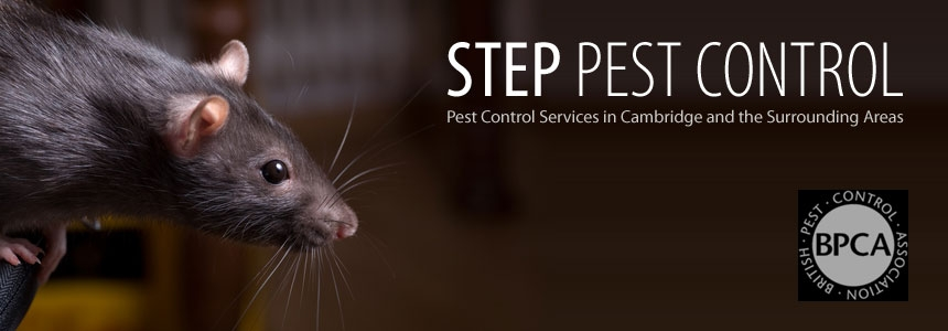 Rat Control Stevenage